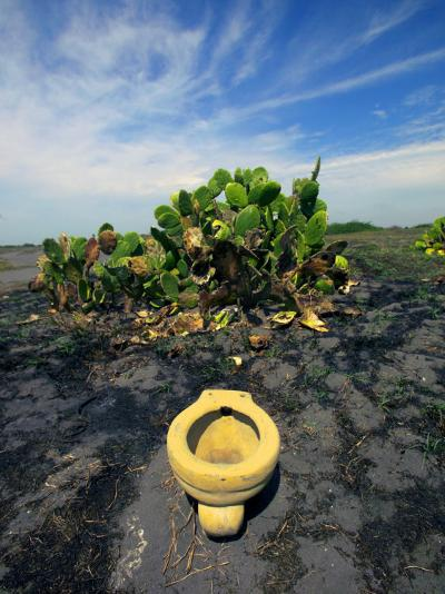 An Toilet on a Black Sand Beach with Cacti-Raul Touzon-Photographic Print