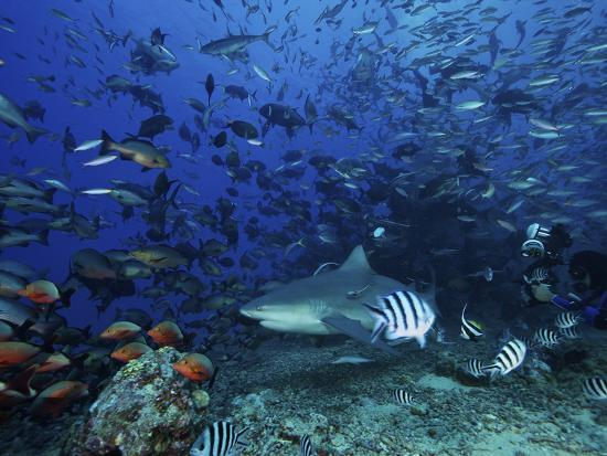 An Underwater Photographer Films a Large Bull Shark Surrounded by Hundreds of Reef Fish, Fiji-Stocktrek Images-Photographic Print