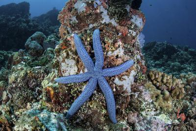 An Unusual Sea Star Clings to a Diverse Reef Near the Island of Bangka-Stocktrek Images-Photographic Print