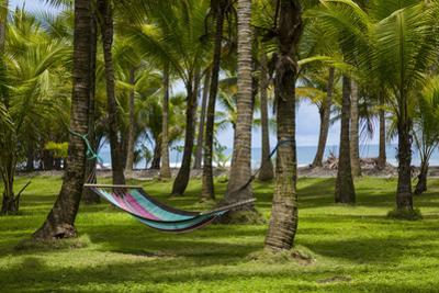 An Empty Hammock Suspended Between Palm Trees Along the Beach Near Parrita by Anand Varma