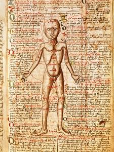 Anatomical Chart of Human Body, Tractatabus de Pestilentia, 15th century Manuscript by M. Albik