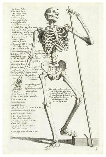 Anatomical diagram showing skeleton, front view, with legends Art on human body, skeleton label, skeleton skull, skeleton worksheet, skeleton illustration, skeleton test, axial skeleton, bone marrow, skeleton drawing, skeleton parts, skeleton bones, skeleton sketch, skeleton chart, skeleton from the back, endocrine system, skeleton spine, head and neck anatomy, human anatomy, skeleton art, skeleton neck, skeleton pelvis, skeleton printable, skeleton head, skeleton arm, skeleton hand, appendicular skeleton,
