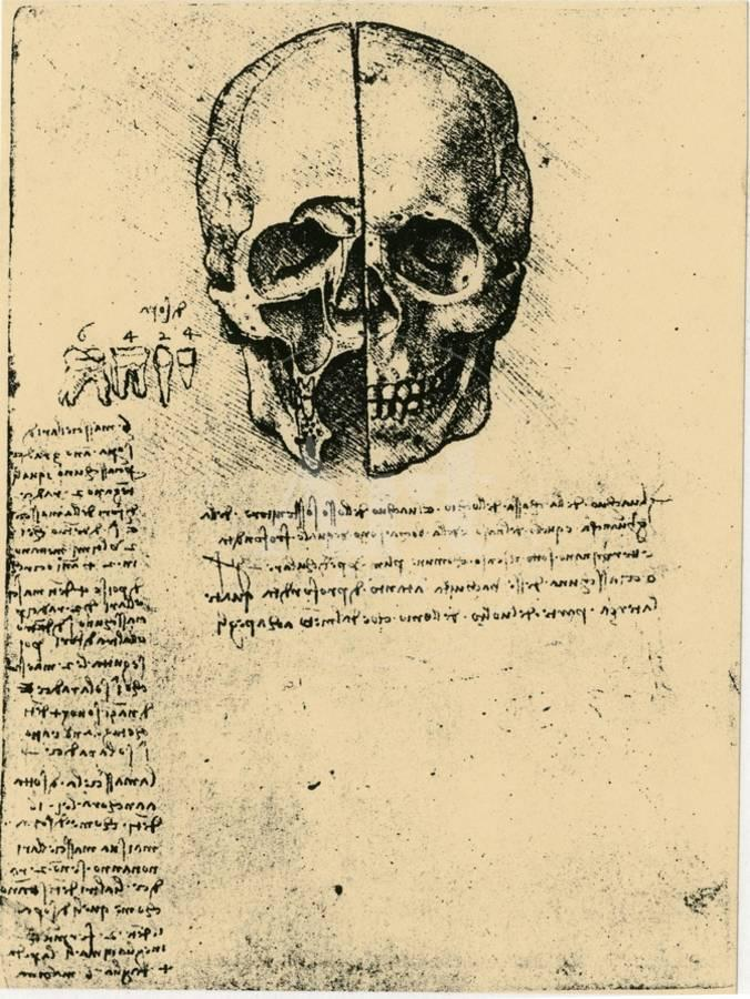 Anatomical Sketch Of A Human Skull C1472 1519 Giclee Print By