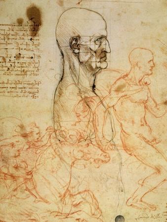 https://imgc.artprintimages.com/img/print/anatomical-studies-circa-1500-07_u-l-odsbm0.jpg?p=0