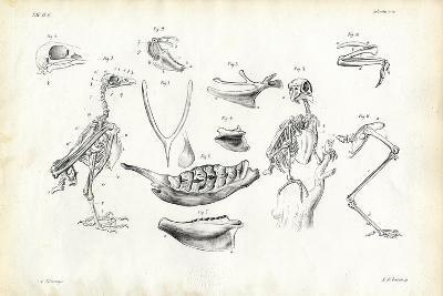 Anatomy, 1863-79-Raimundo Petraroja-Giclee Print