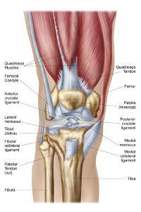 Anatomy of Human Knee Joint