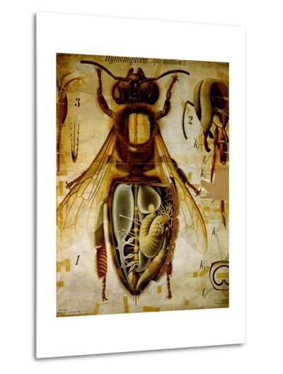 Anatomy of the Honey Bee, No.13, Pfurtscheller's Zoological Wall Chart-Paul Pfurtscheller-Metal Print