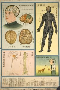 Anatomy of the Nervous System and the Brain