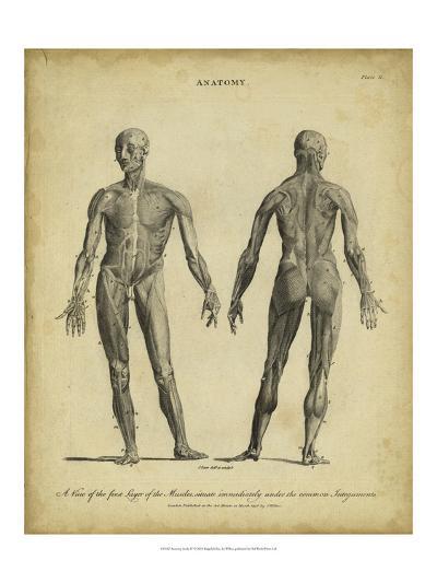 Anatomy Study IV-Jack Wilkes-Art Print
