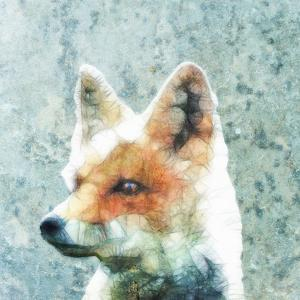 Abstract Fox by Ancello