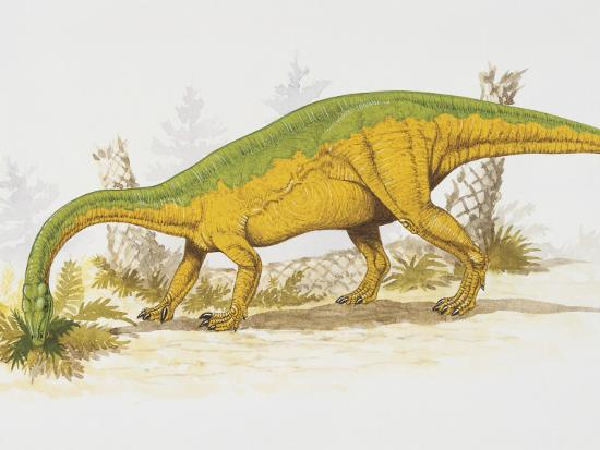 Anchisaurus Eating Plants--Photographic Print