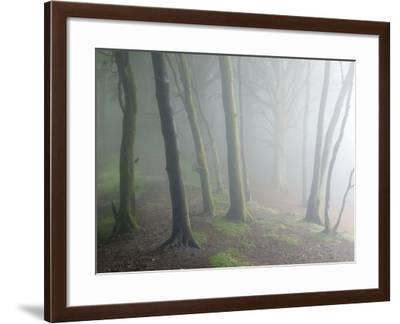 Ancient Beech Woodland-Adrian Bicker-Framed Photographic Print