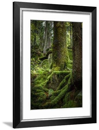 Ancient Forest-Ramona Murdock-Framed Photographic Print