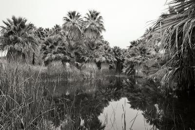 Ancient Palms I-Rita Crane-Photographic Print