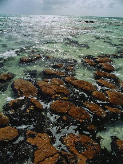 Ancient Stromatolite Reefs Still Flourish in High Saline Shark Bay-O^ Louis Mazzatenta-Photographic Print