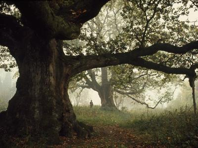 Ancient Trees Dwarf Visitors to Historic Great Birnam Wood-Dean Conger-Photographic Print