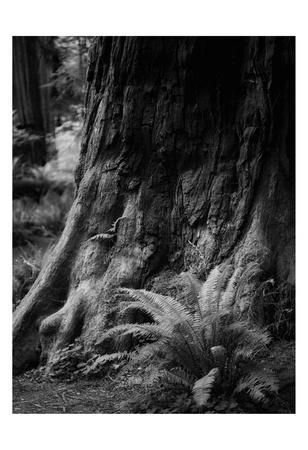 https://imgc.artprintimages.com/img/print/ancient-trunk_u-l-f8ixmh0.jpg?p=0