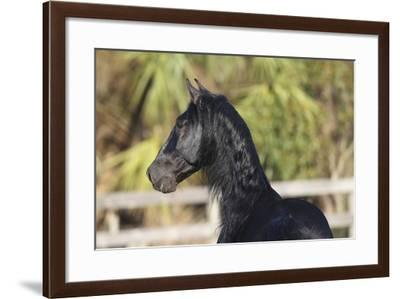 Andalusian 038-Bob Langrish-Framed Photographic Print