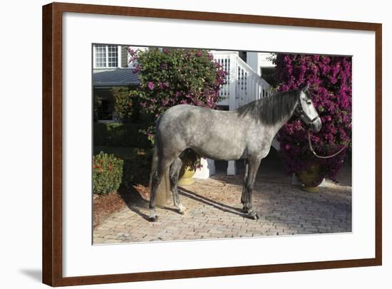 Andalusian 062-Bob Langrish-Framed Photographic Print