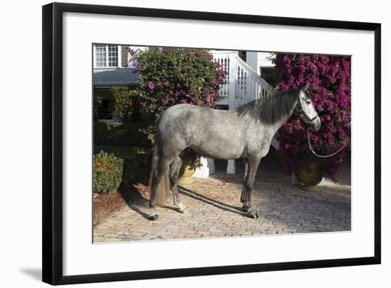Andalusian 062-Bob Langrish-Framed Photographic Print
