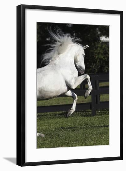 Andalusian 063-Bob Langrish-Framed Photographic Print
