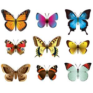 Butterflies Photo-Realistic Vector Set by andegro4ka