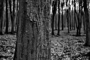 Dark Forrest by anderm