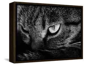 The Face Of A Cat In Black And White by anderm