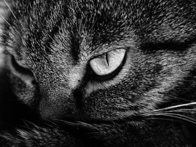 The Face Of A Cat In Black And White