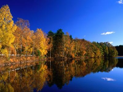 Autumn Lakeside Trees, Halland, Sweden