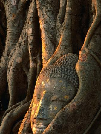 Buddha Head Inbedded in Roots at Wat Phra Mahathat, Ayuthaya, Thailand