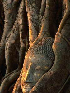 Buddha Head Inbedded in Roots at Wat Phra Mahathat, Ayuthaya, Thailand by Anders Blomqvist