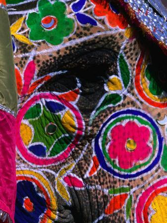 Close-Up of an Elephant, Brightly Painted for the Elephant Festival, Jaipur,Rajasthan, India