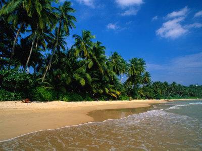 Palm Trees on Mirassa Beach, Weligama, Sri Lanka