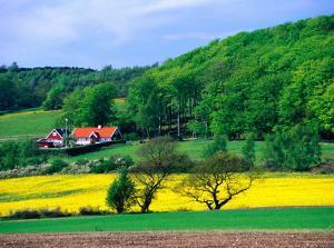 Rape Fields and Forests Surrounding Farm House on Kulla Peninsula, Skane, Sweden by Anders Blomqvist