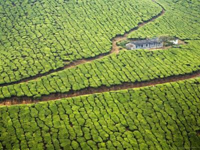 Single House Surrounded by a Vast Tea Plantation
