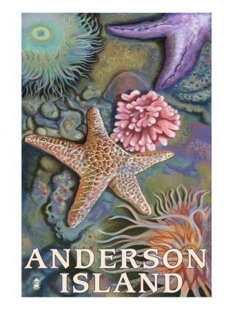 https://imgc.artprintimages.com/img/print/anderson-island-wa-tidepools_u-l-q1goy6t0.jpg?p=0