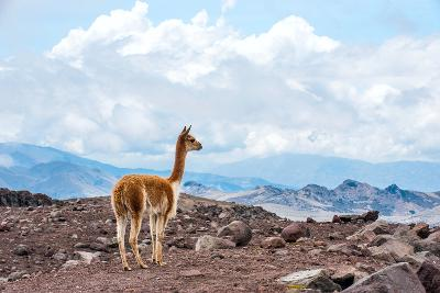 Andes of Central Ecuador-xura-Photographic Print