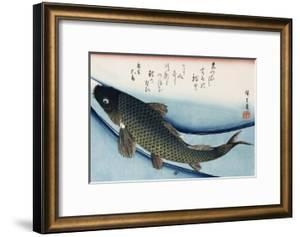 Carp', from the Series 'Collection of Fish' by Ando Hiroshige