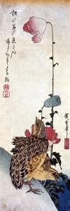 Hiroshige: Poppies by Ando Hiroshige