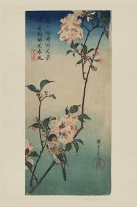 Small Bird on a Branch of Kaidozakura (Kaido Ni Shokin) by Ando Hiroshige