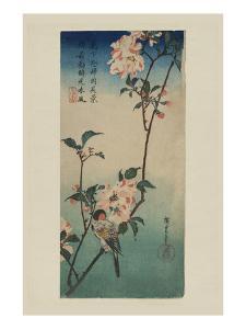 Small Bird on a Branch of Kaidozakura (Kaido Ni Shokin) by Ando Hiroshige