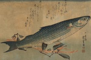 Striped Mullet by Ando Hiroshige