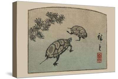 Turtles (Kame)