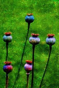 Bulbs by Andr? Burian