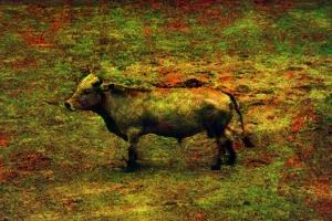 Bull by Andr? Burian