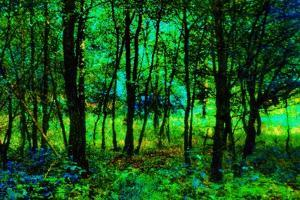 Nature by Andr? Burian