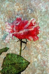Rose by Andr? Burian