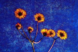 Yellow and Blue by Andr? Burian