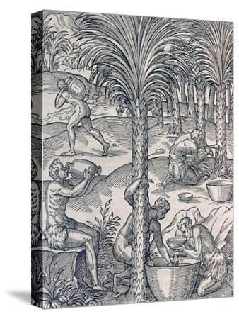 Inhabitants of Cape Verde Making Drinks from Palm Trees, Engraving from Universal Cosmology